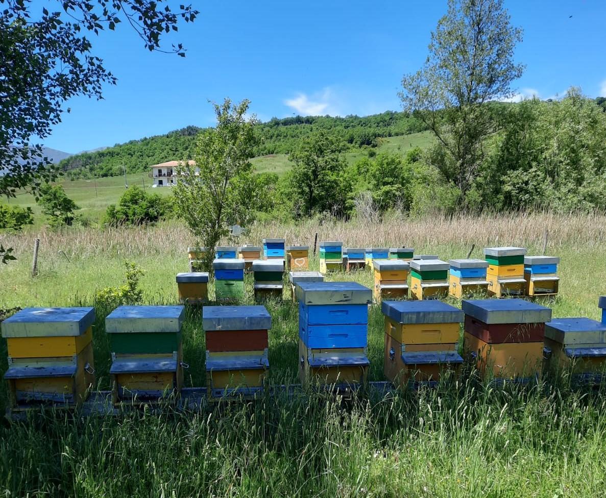 apicoltura (2)